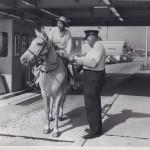 Horse-going-thru-tolls-3569